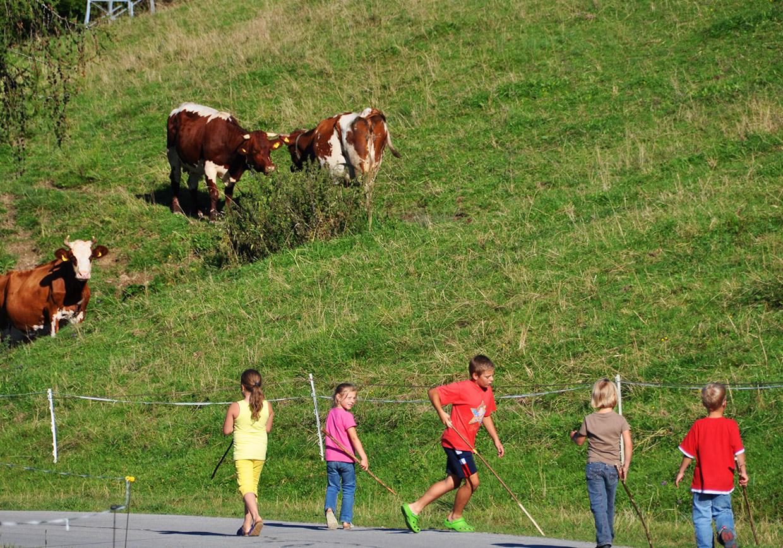kindertraum, kühe, pferde, wiesen, felder, gaudi, spass, spiel, sport, vorderstoder