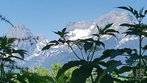 g-wandern-baumschlagerberg-berge-wandern-urlaub-huette-gipfelkreuz-erklimmen-bergsteigen-bergwandern